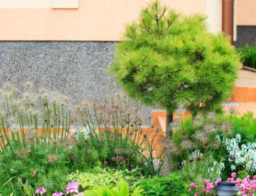 Trädgårdsservice Stockholm B&B Städservice AB är din räddare i nöden när du är stressad och inte har tid